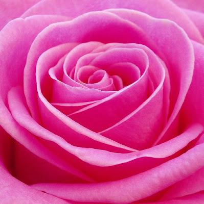 日頃の疲れを癒してくれるお花の写真いろいろ