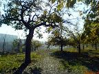 درخت، فرحزاد Derakht
