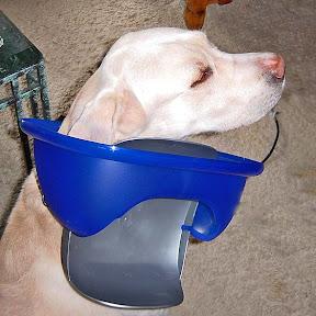 Unser Hund ist im Eimer
