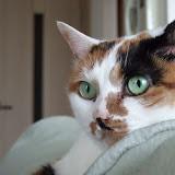 Picasa ウェブ アルバム - hideto - 猫
