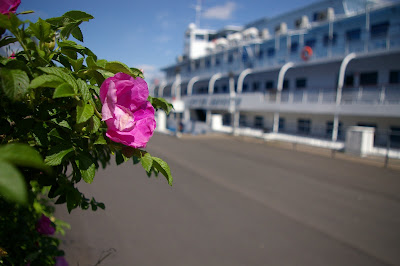 Мраморные розы Охотск заказ памятника на кладбище Сорск