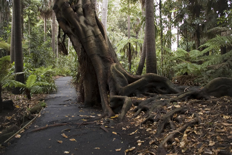 John Trif Photography Royal Melbourne Botanical Gardens