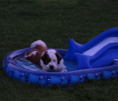 Arnie in BigE's Whale Pool