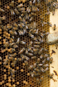 Hive Mind Hive 2 Queen