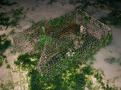 Cage, bubu