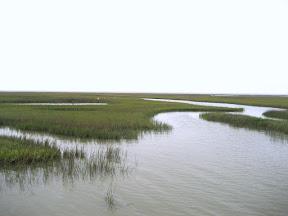 Spartina Marsh