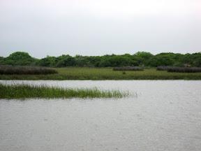 Redfish grassy point
