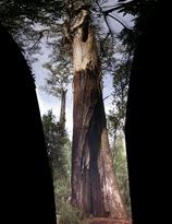 tree pano (2)-1