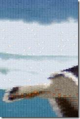 0-0-IMGP1837 Mosaic