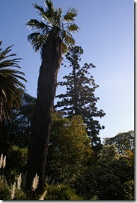Botanic Garden : leaning to North