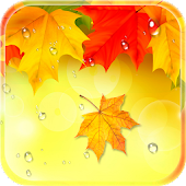 Autumn Live Wallpaper 2018: Raindrops Background