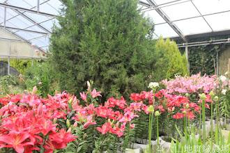 Photo: 拍攝地點: 梅峰-溫帶花卉區 拍攝植物: 香水百合 拍攝日期: 2015_09_07_FY