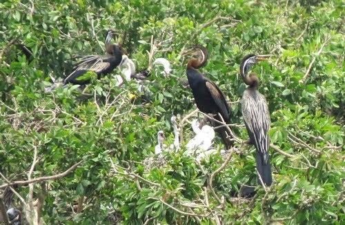 Vườn quốc gia Tràm Chim mùa nước nổi 3