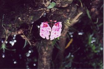 Photo: #014-Jardin botanique de Deshaies