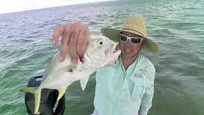 Florida Keys: Horse Conch and Hogfish thumbnail