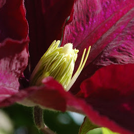 by Angela Codrina Andries Bocse - Nature Up Close Gardens & Produce