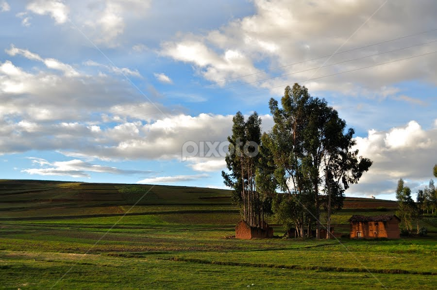 Trees growing from the living room by Justin Benson - City,  Street & Park  Vistas ( patchwork, home, thatch roof, hut, living room, adobe, trees, house, mud brick, fields )