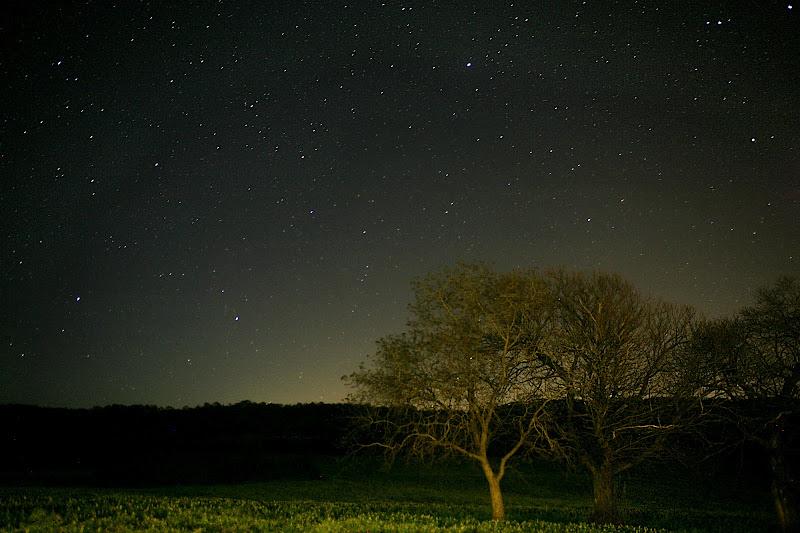 Notte nella Foresta Umbra di Vale DG90