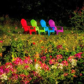 by Carolyn Odell - Flowers Flower Gardens