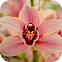 Orchid Wallpapers icon