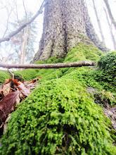 Photo: Moss on the roots of a tree at Wegerzyn Gardens in Dayton, Ohio.