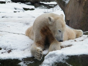 Photo: Knut in seinem Element :-)