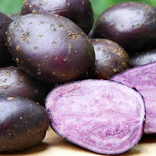 Purple-Majesty-Potatoes.jpg