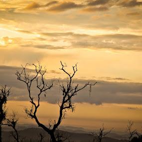 by Maji Shuki - Landscapes Prairies, Meadows & Fields ( cloudly, mount, tree landscape )