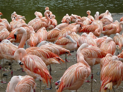 Photo Ras Al-Khor Wildlife Sanctuary