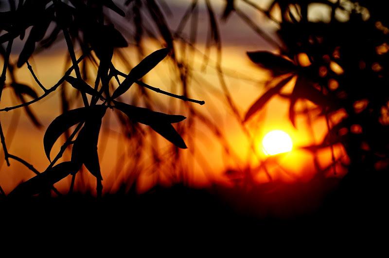 Arancio di sera...buon tempo si spera! di cugar79