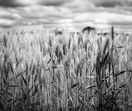 Photo: Hay Field in Analog