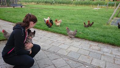 Photo: socialiseren op de kinderboerderij (Melle)