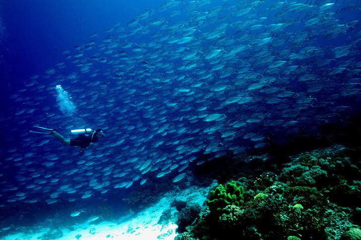 Palawan Philippines (25 Best Dive Sites in the World to Put on Your Bucket List).