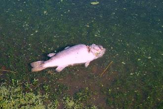 Photo: Dead Bass