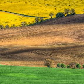 Curves fields by Miroslav Havelka - Landscapes Prairies, Meadows & Fields ( moravien, colors, landscape, spring, curves, fields )