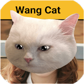Wangcat - Wang Cat Sticker HD