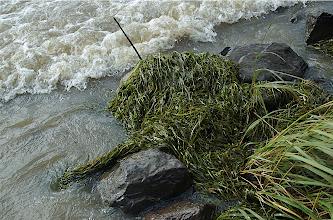 Photo: Algae and surf