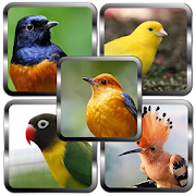 Suara Master Burung Kicau