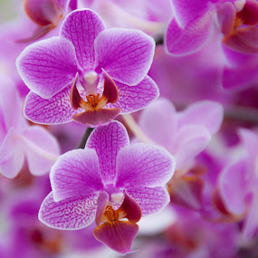 orchid by Kitty Bern - Nature Up Close Flowers - 2011-2013