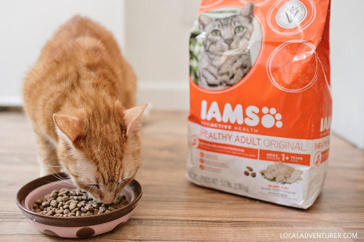 IAMS cat food coupons.