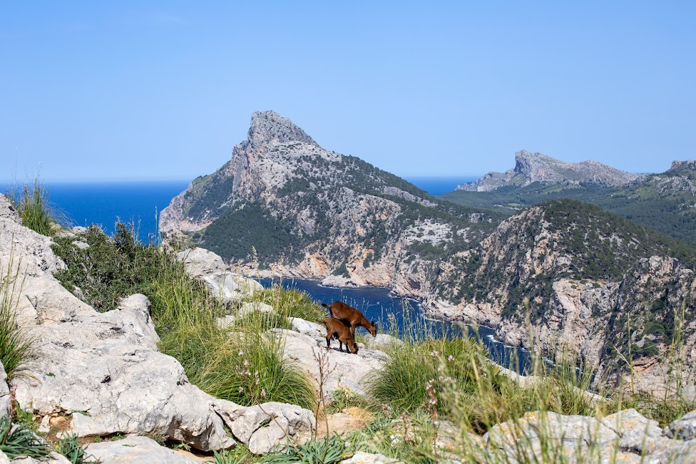 Mirador des Colomer, Cap de Formentor
