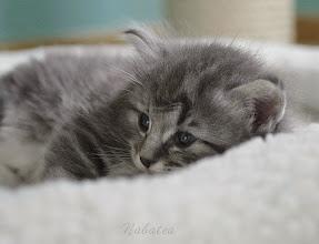 Photo: Varekai - 28 days old