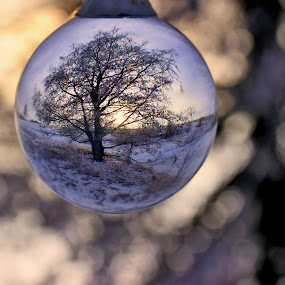 Strom v kouli by Jarka Hk - Nature Up Close Other Natural Objects ( balls, winter, nature, tree, photo )