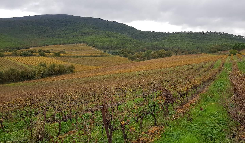 Vineyard Toulon