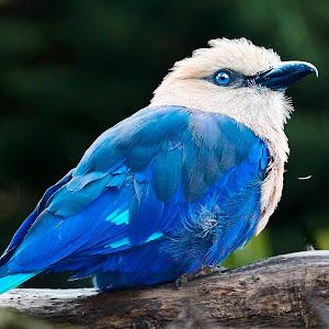 0 Bird 98212~Q.jpg