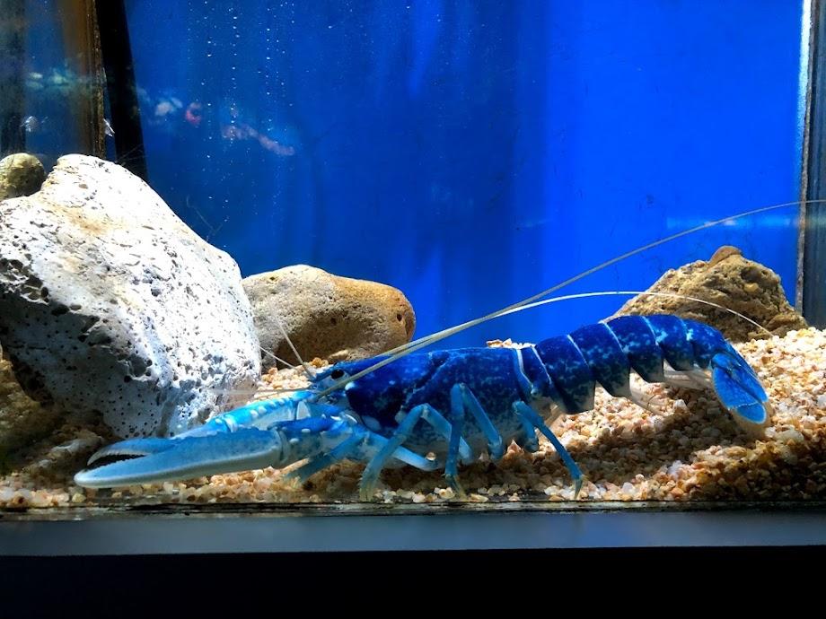 Foto Aquarium - El Acuario de Barcelona 9