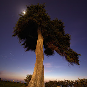 by Christopher Payne - Nature Up Close Trees & Bushes ( moon, sky, tree, park, grass, california, sunset, la, night, dusk, jolla, color, colors, landscape, portrait, object, filter forge )