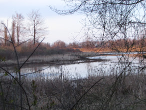 Photo: Pond with beaver dam