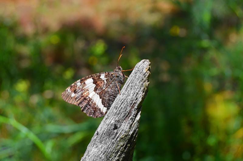 Mariposa di TiffanyMarchetti