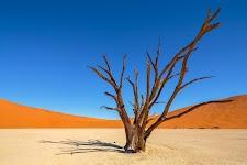 kale boom in lichtgele woestijn met oranje bergen